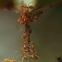 Il bambino e il formicaio