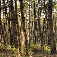 Cercare nel bosco le parole