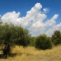 Perché bisogna sradicare gli ulivi